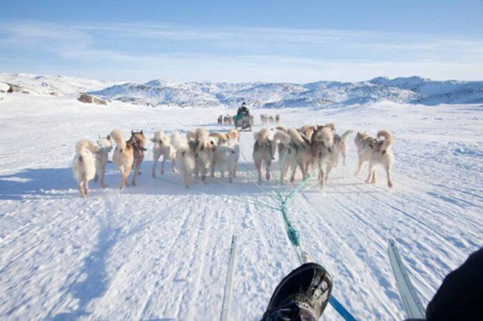 4 hour Dog Sledding Tour | Kangerlussuaq | West Greenland