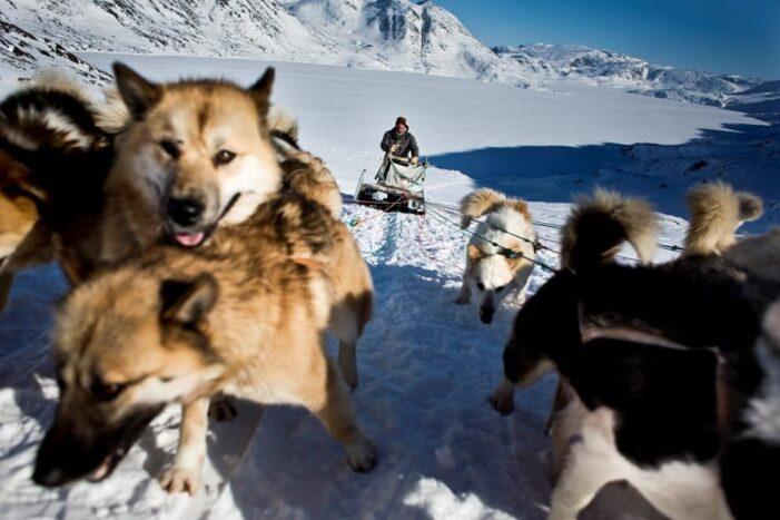 Hundeslædetur | Sisimiut