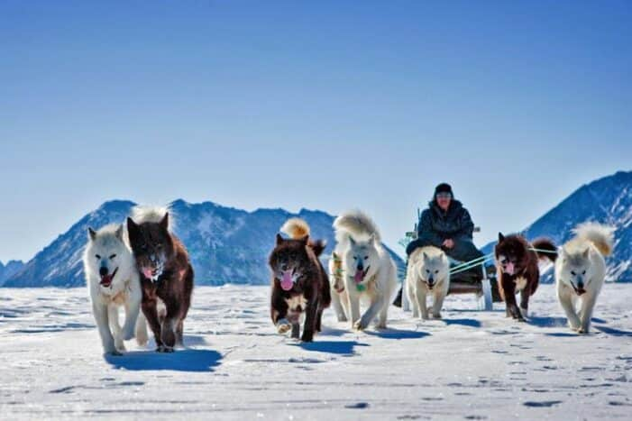 Two-Day Dog Sled Adventure | Kangerlussuaq