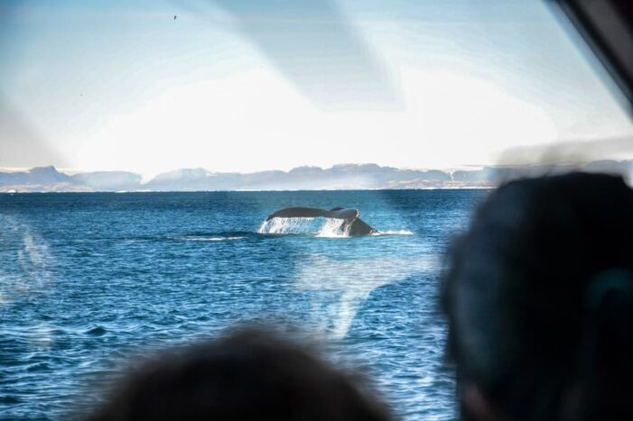 Whale Watching | Uummannaq | North Greenland