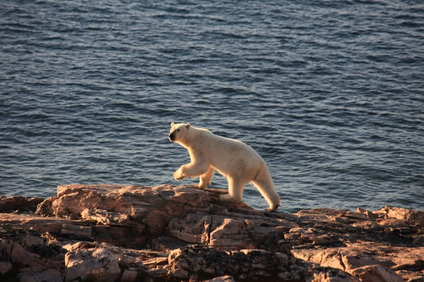 Arctic Nature and Wildlife