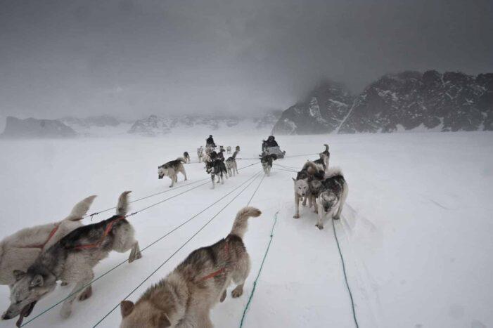 Arctic Wildlife Safari | 8 Days | Ittoqqortoormiit | East Greenland