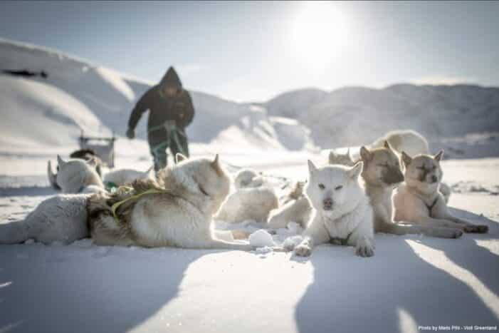 A Day of Dogsledding | Ilulissat | Disko Bay
