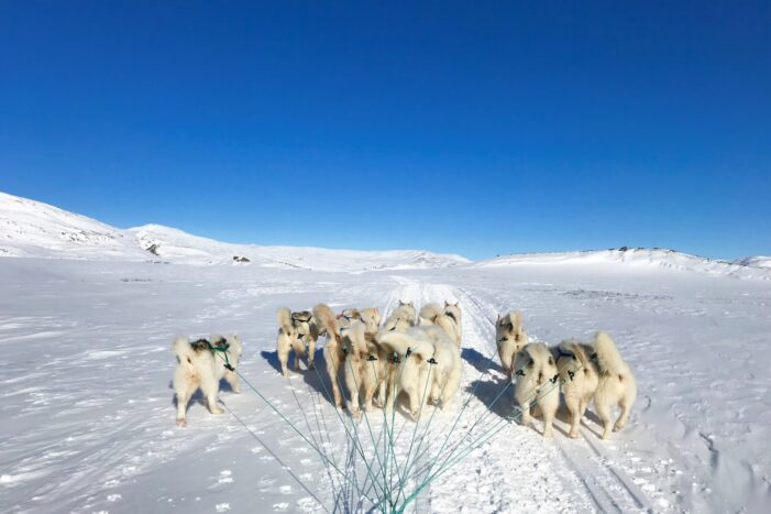 "Dog Sledding the Arctic Circle Trail to ""the Viewpoint"" 