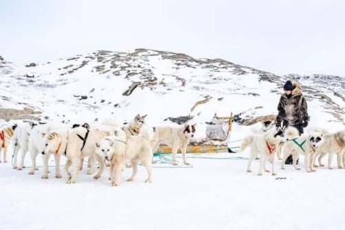 Hundeslædetur | Kangerlussuaq | Vest Grønland