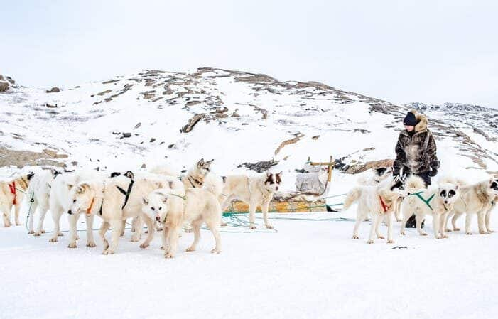 Dog Sledding Tour | Kangerlussuaq | West Greenland