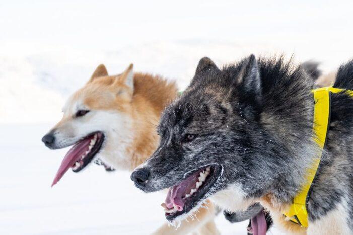 Dogsled tour | Ilulissat | Disko bay