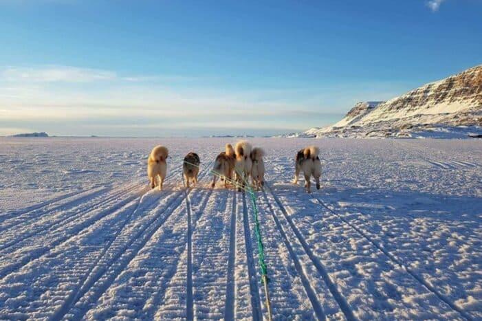 Dogsledding, 5 hours | Qeqertarsuaq | Disko Bay