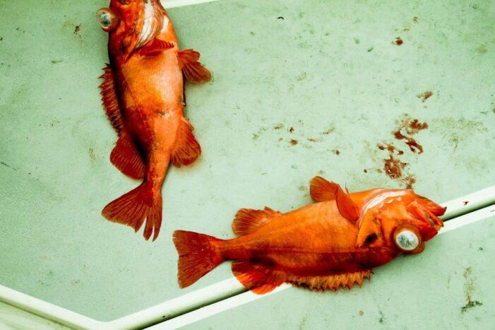 Fish'n'dish | Qooqqut Nuan | Nuuk