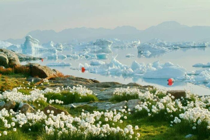Highlights of South Greenland | 8 Days