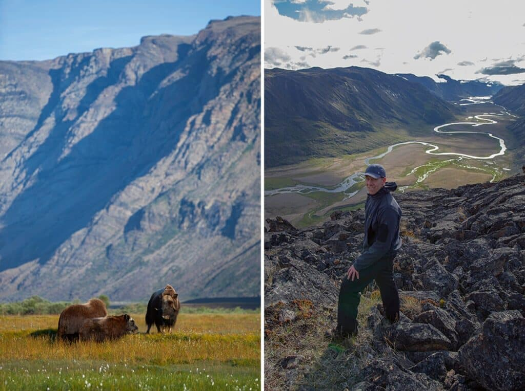 Mush ox in Kangerlussuaq and man overlooking a liver running between two mountain sides