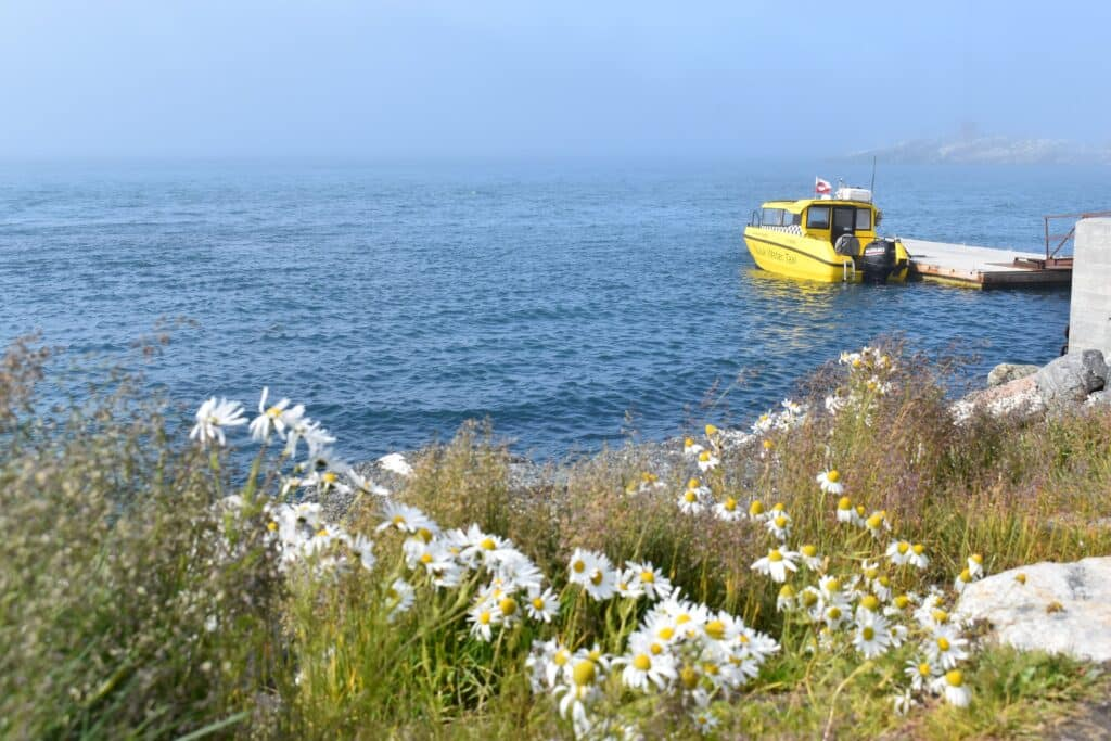 Flowers blooming and a boat in the background