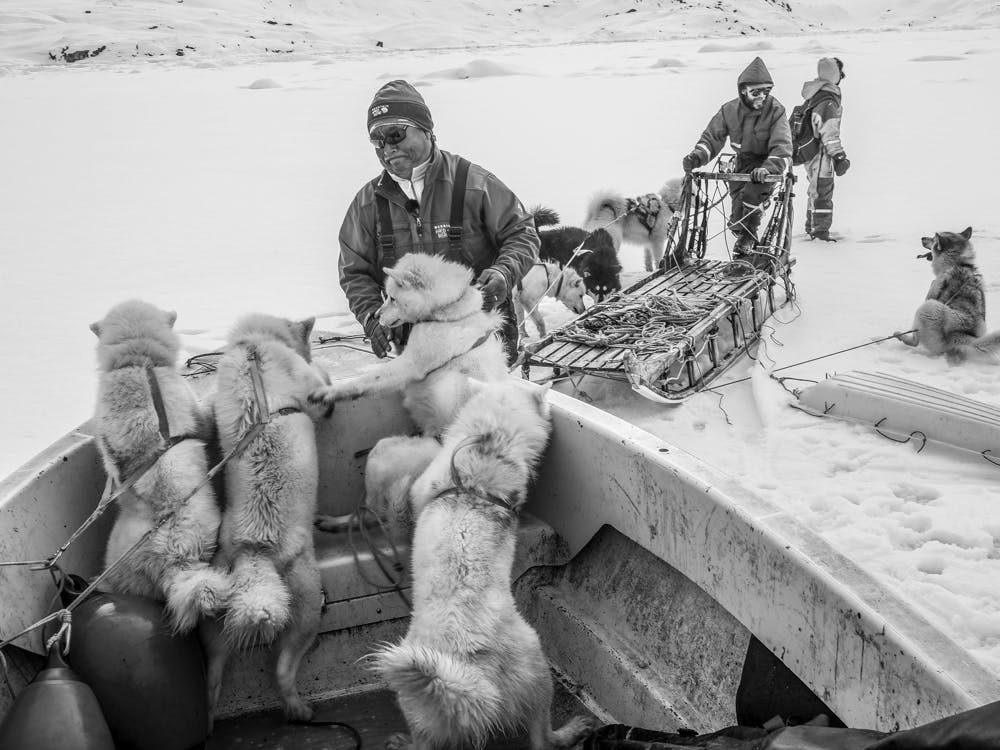 Unloading the sled dogs from a boat