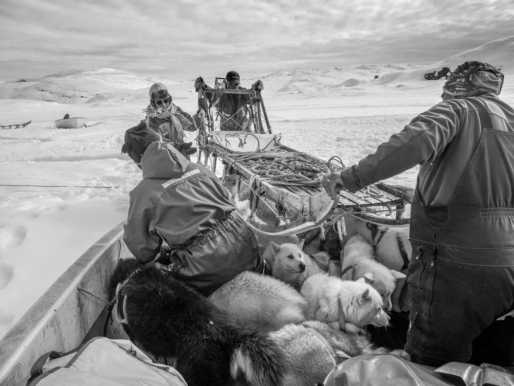 Getting the dog sled onto a boat