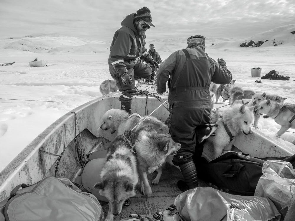 Man and his sled dogs getting on a boat