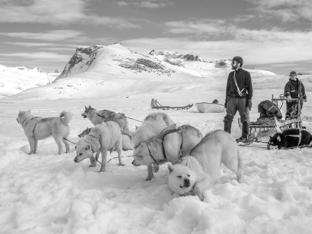 Two men, a dog sled and a bunch of sled dogs