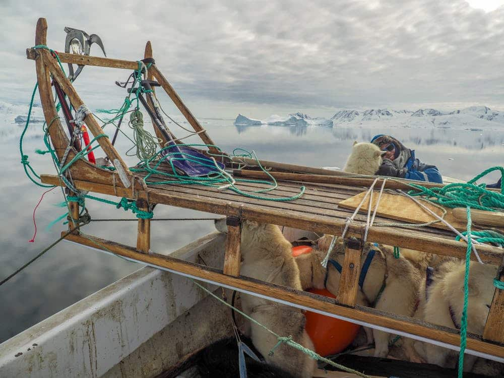 Sled dogs and dog sled on a boat