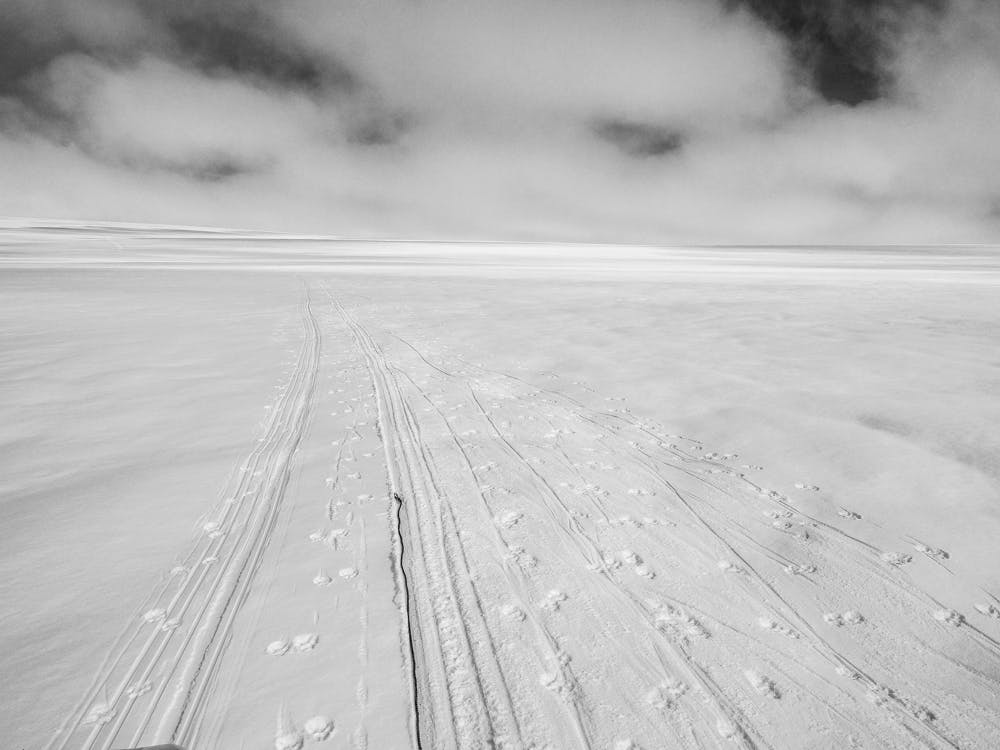 Trails of a dog sled and its sled dogs