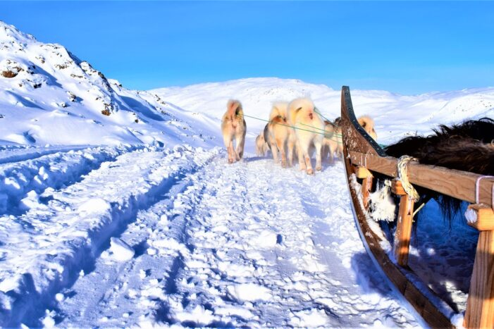 Dog Sled Express | Tasiilaq | East Greenland