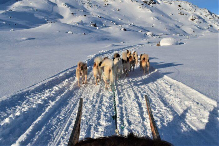 Hundeslæde tur | Tasiilaq | Østgrønland