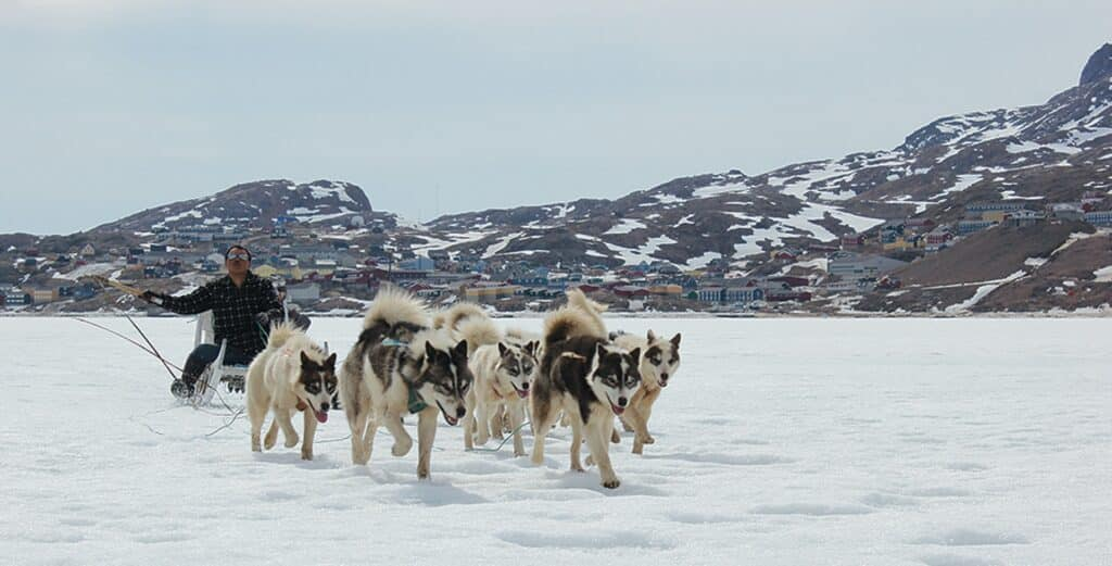 Musher and Greenlandic sled dogs on the ice