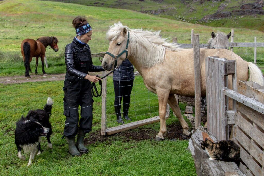 Woman with a horse at a Guest farm called Inneruulalik