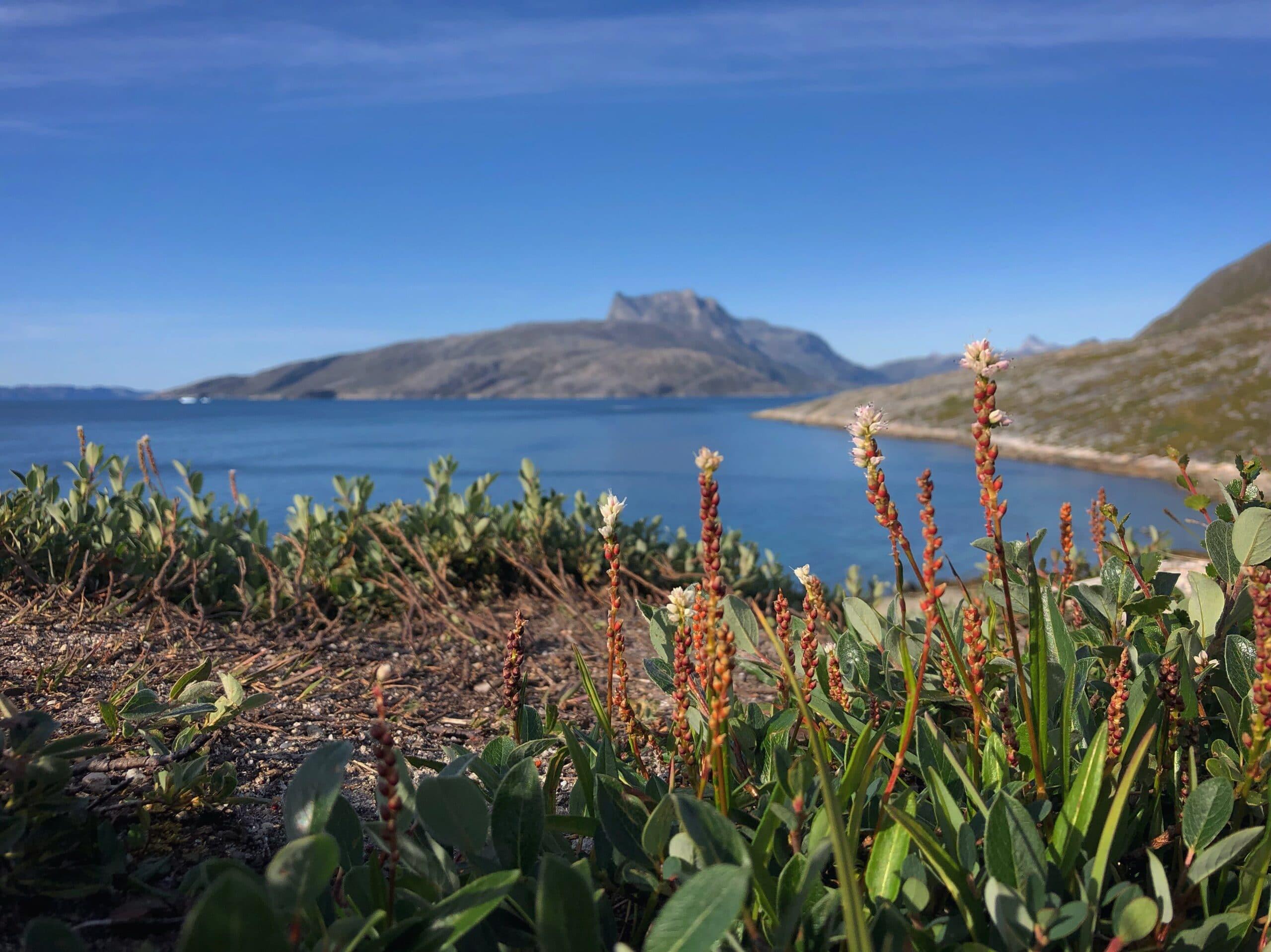 Flowery Nuuk