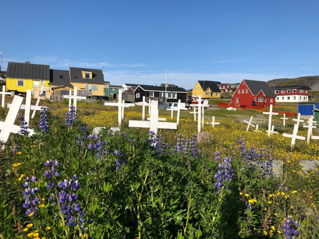 Purple flowers at a cemetery in Nuuk