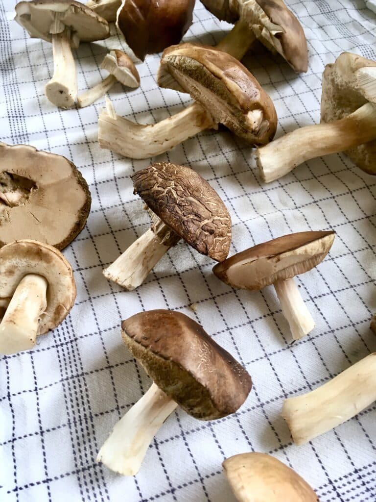 Mushrooms on a tea towel