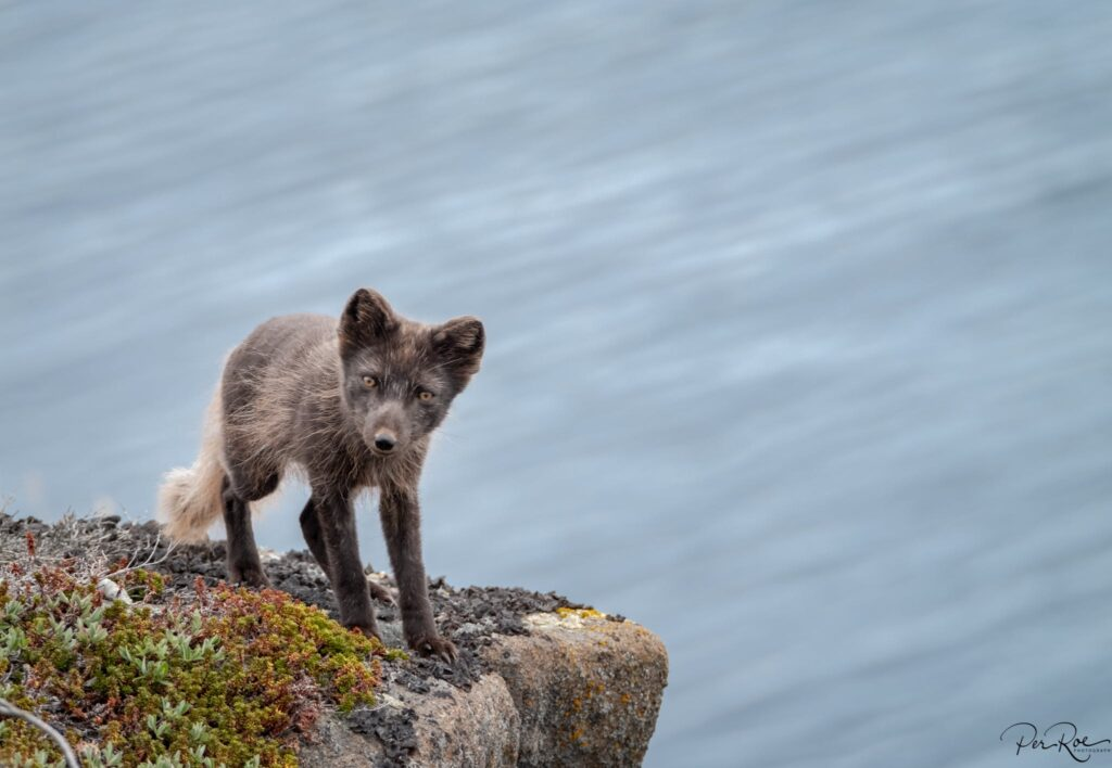 Cute puppy standing on a rock