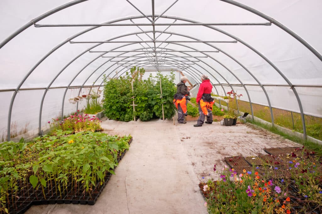 Greenhouses at Upernaviarsuk agricultural Research Station
