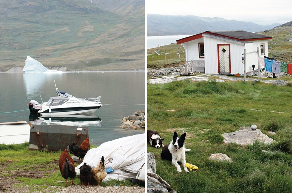 Life in the south of Greenland, dogs and chickens running free