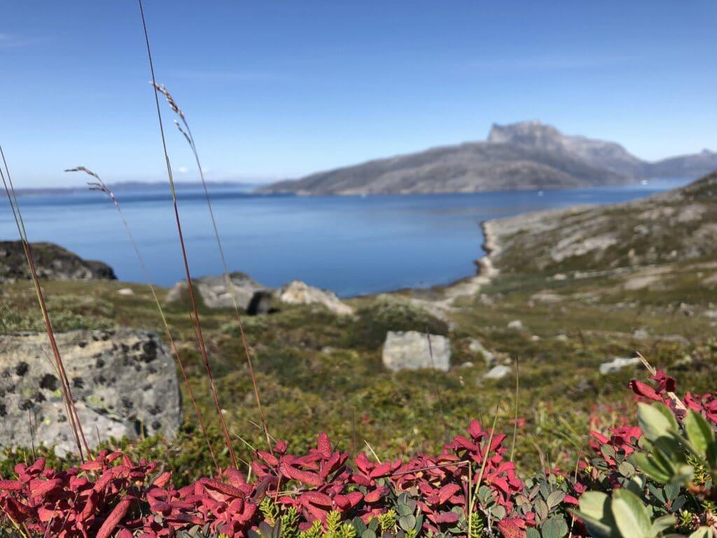 Flowers and Sermitsiaq Mountain