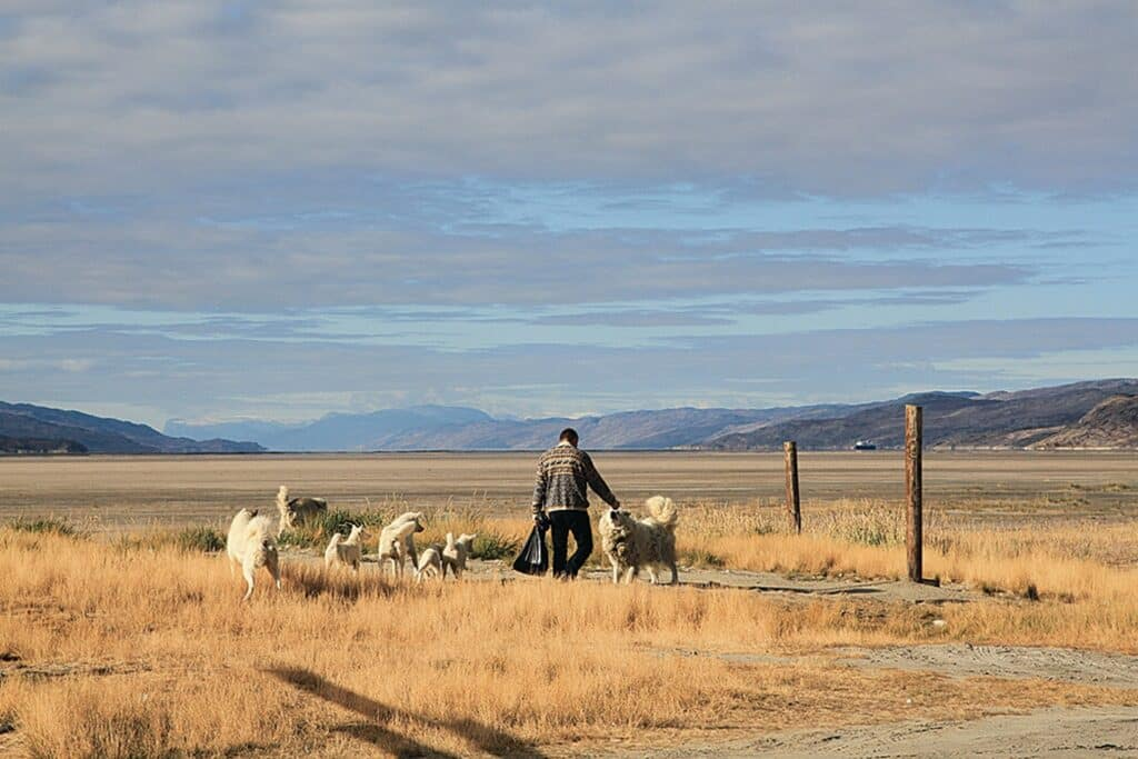 Local man saying hi to sled dogs in Kangerlussuaq