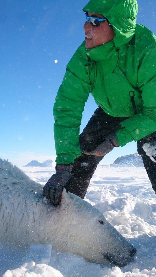 Man standing over a dead polar bear