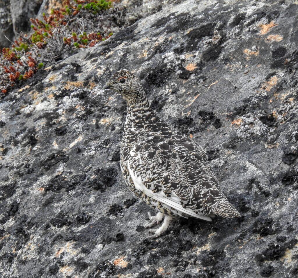 A camouflage bird
