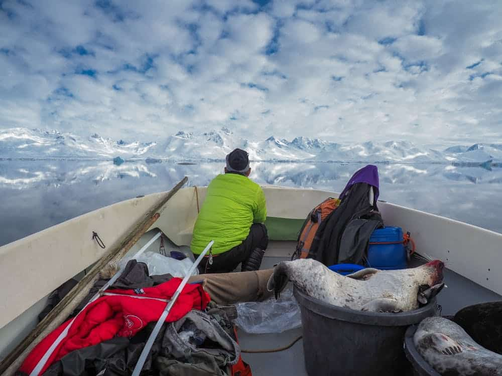 Man and dead seals on a boat sailing in the fjord in Greenland