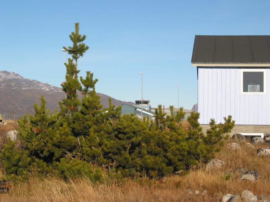 A small Christmas tree outside a hut