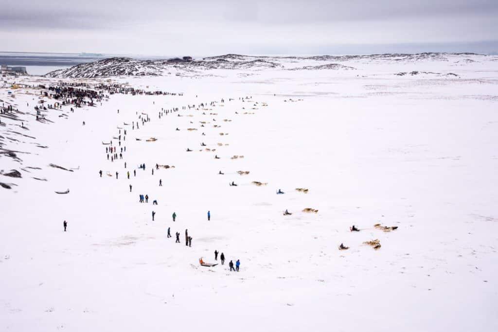 Arctic Palerfik
