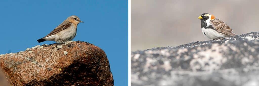 Wildlife and birds near the glacier