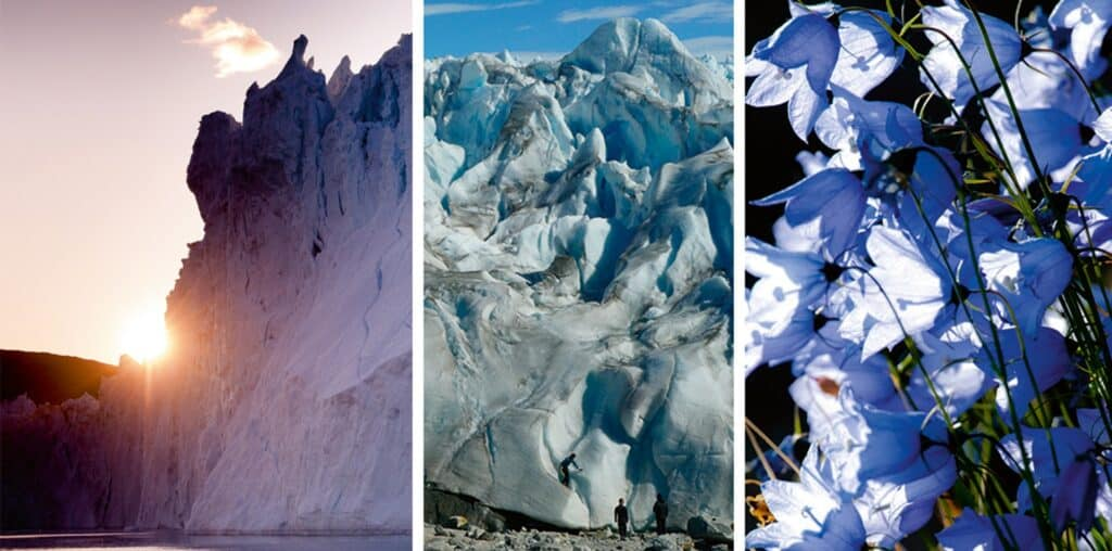 Three pictures showing a glacier from the surface of the water, two people climbing the glacier and some purple flowers