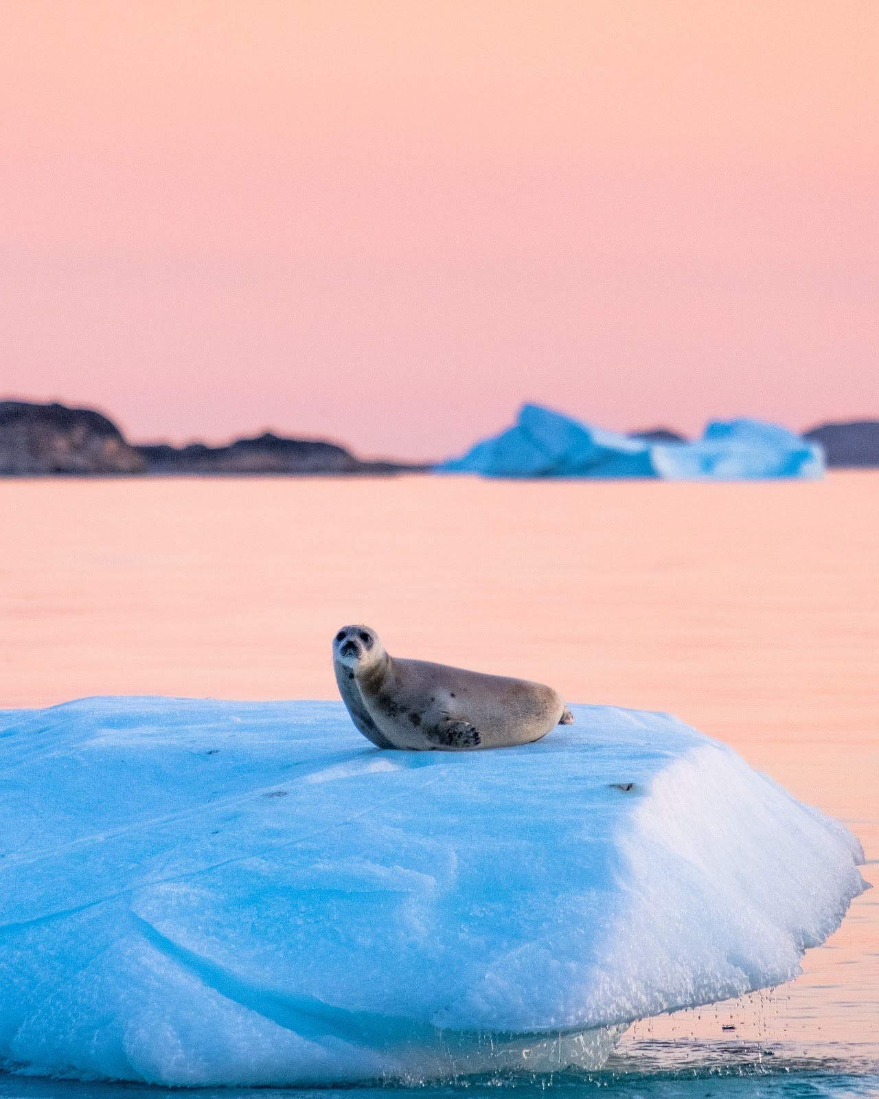 The first time I saw a seal resting on an Iceberg