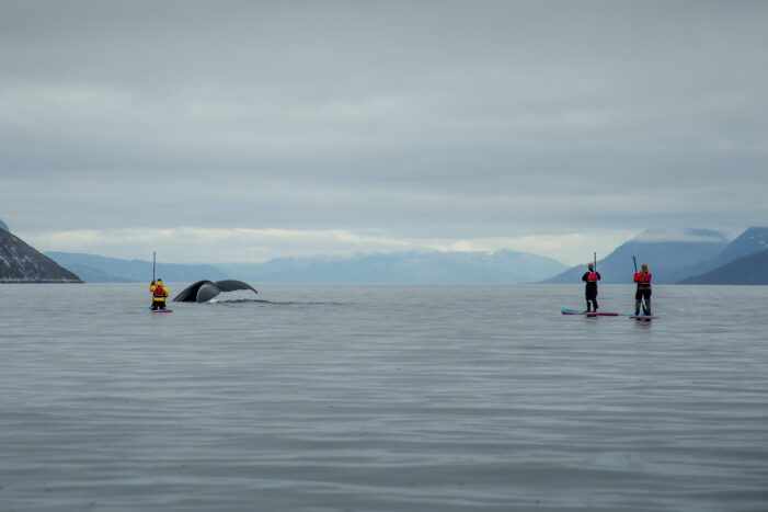 Stand up paddleboard with Whales or by Sermitsiaq waterfall   Nuuk