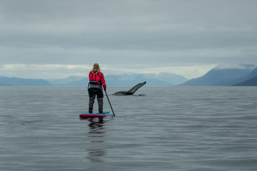Stand-up paddlboarding with whales in the Nuuk Fjord - summer - Guide to Greenland