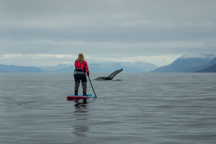 Stand up paddleboard with whales or fjord adventure I Nuuk