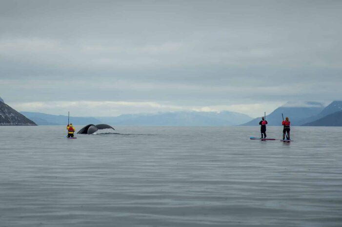 Weekend Stand up paddleboard with whales or by Sermitsiaq waterfall I Nuuk