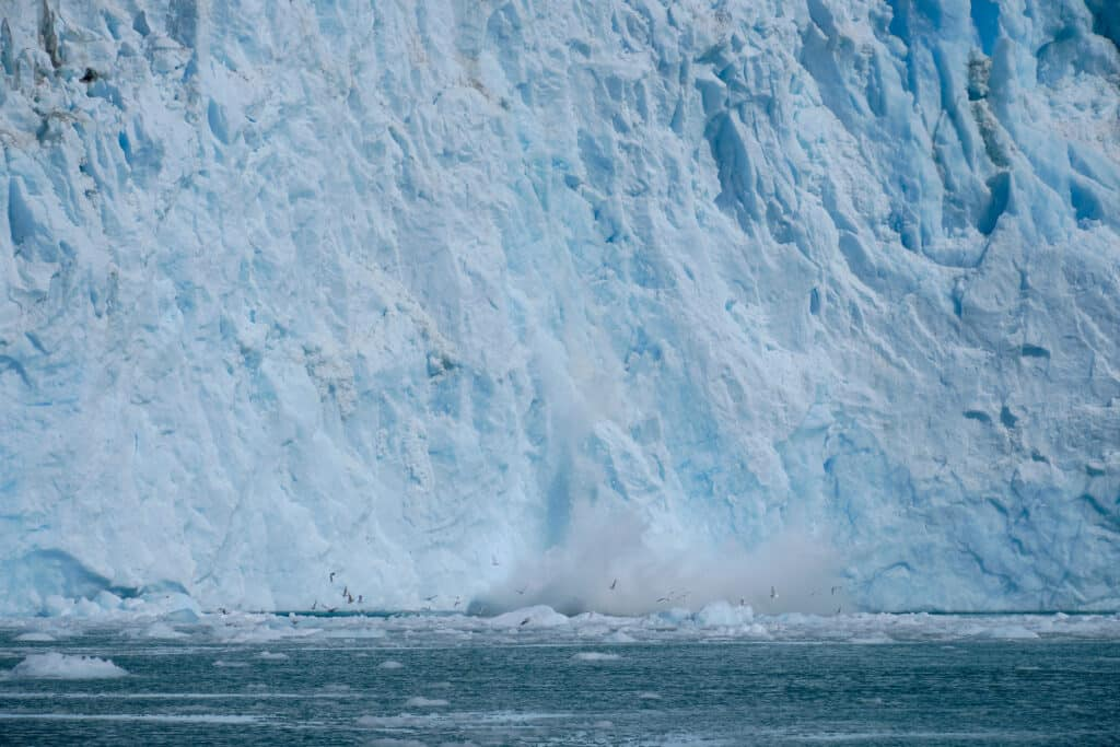 Birds stirred up by a calving event at a glacier in the Eternity Fjord near maniitsoq - Guide to Greenland
