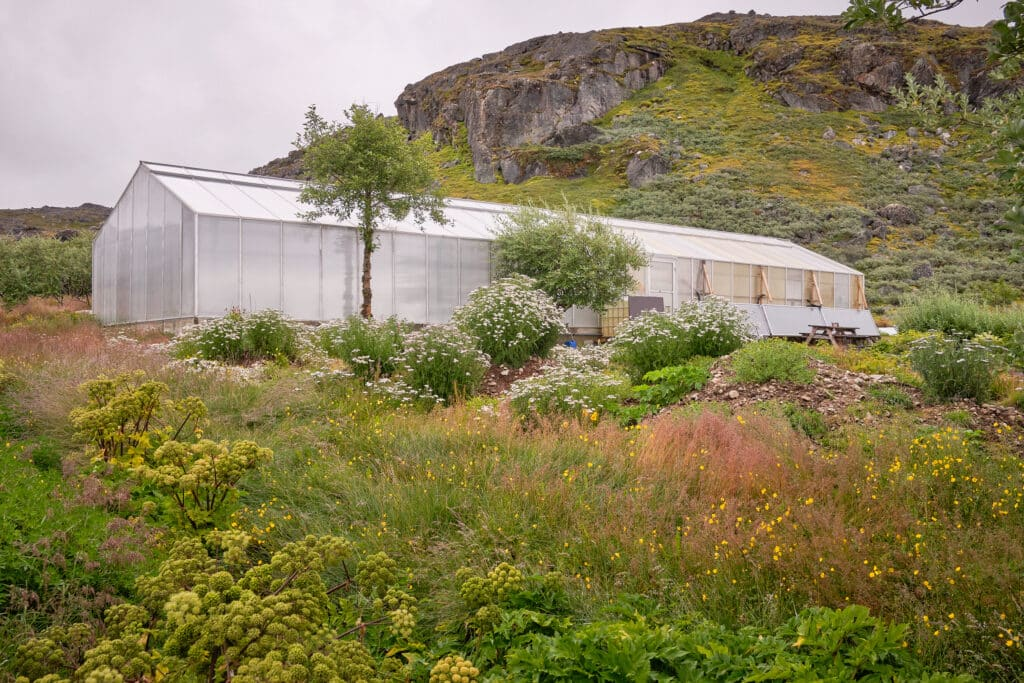 One of the large greenhouses at Upernaviarsuk agricultural station near Qaqortoq