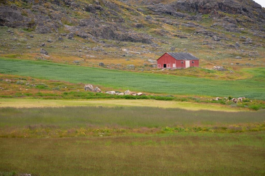 The regular green fields of Upernaviarsuk near Qaqortoq