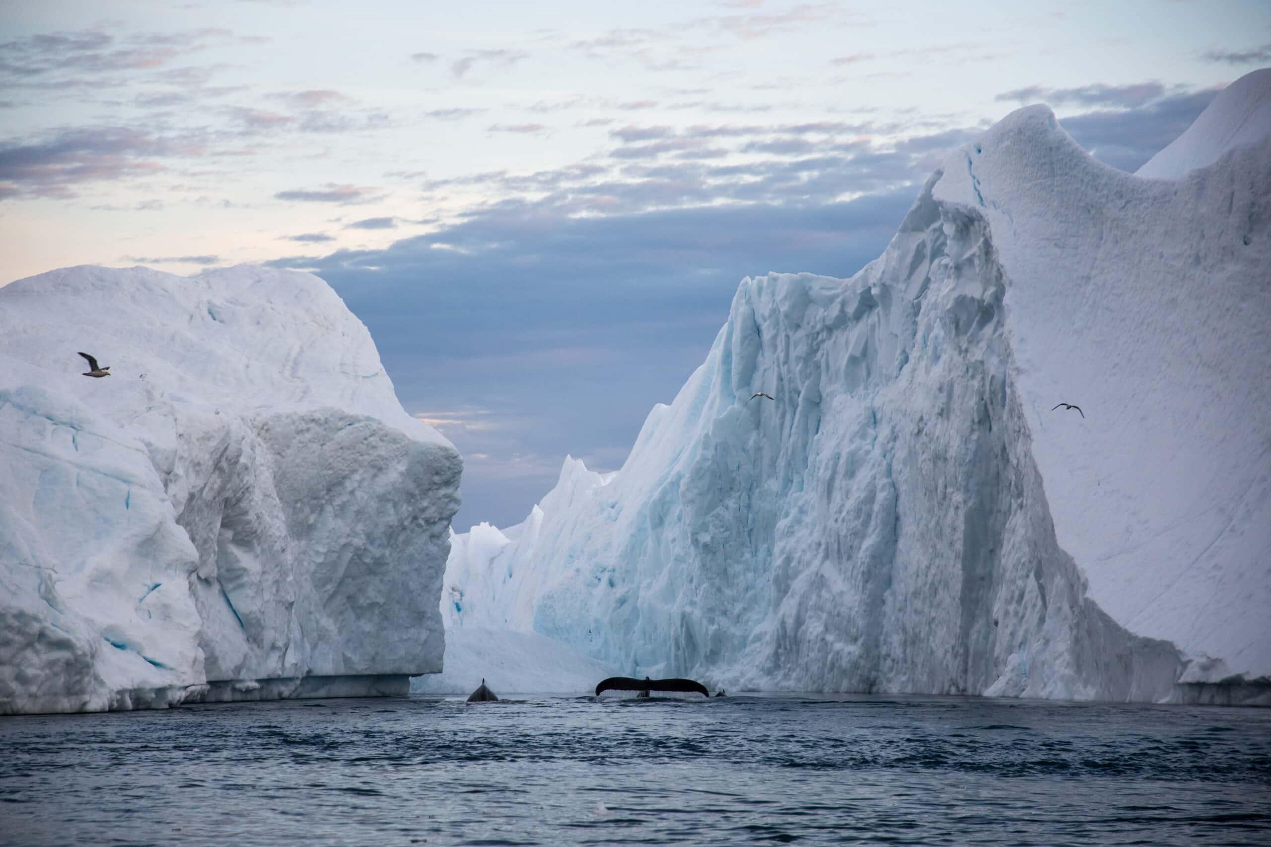North Greenland Tours